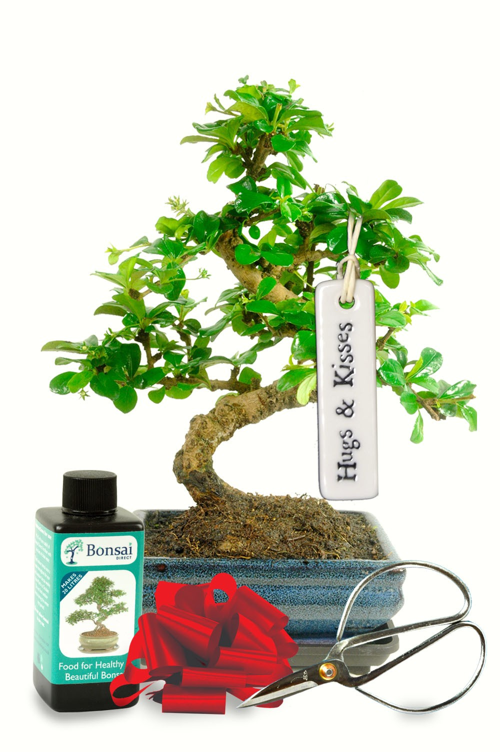 Bonsai Trees As a Gift - Bonsai trees are a perfect gift for any loved one